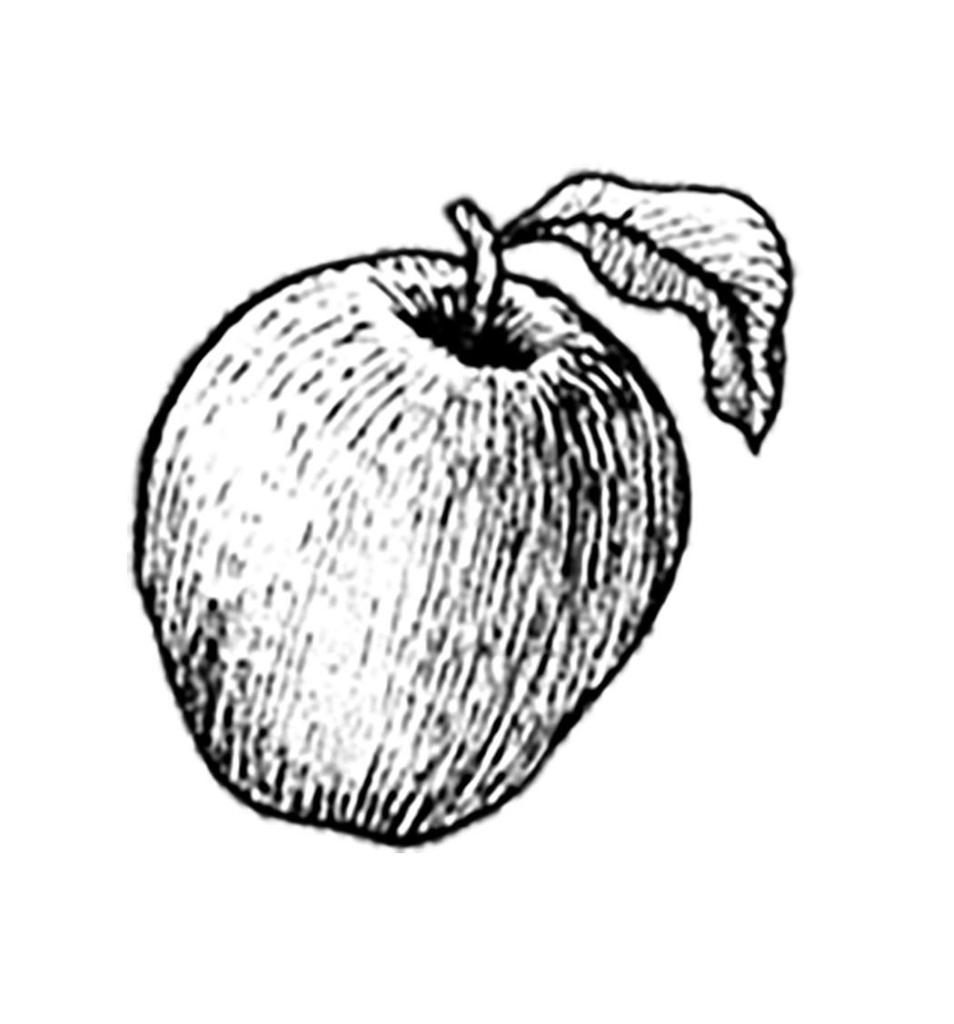 Manzana Calímaco